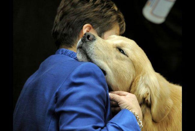 20 razões para convencer qualquer pessoa a ter um cachorro em ...