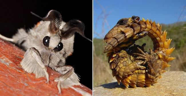 Veja 27 animais bizarros que você não vai acreditar que existem de ...