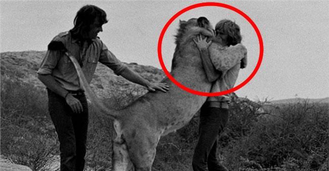 O incrível reencontro de um leão e seus dois velhos amigos