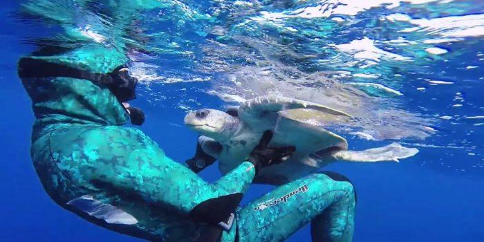 Mergulhador salva tartaruga marinha e recebe agradecimento dela