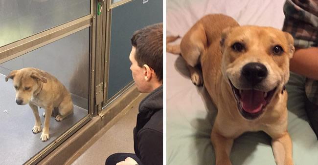 15 fotos 'antes e depois' mostram como adoção pode fazer bem a ...