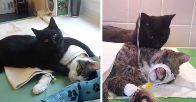 'Gato enfermeiro' cuida de animais doentes em abrigo polonês ...