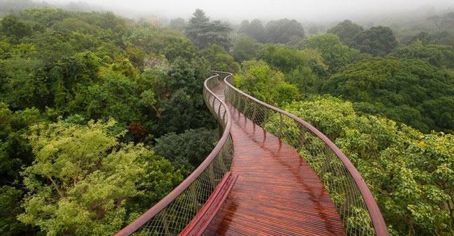 Essa passarela foi construída nas copas das árvores para você ter ...