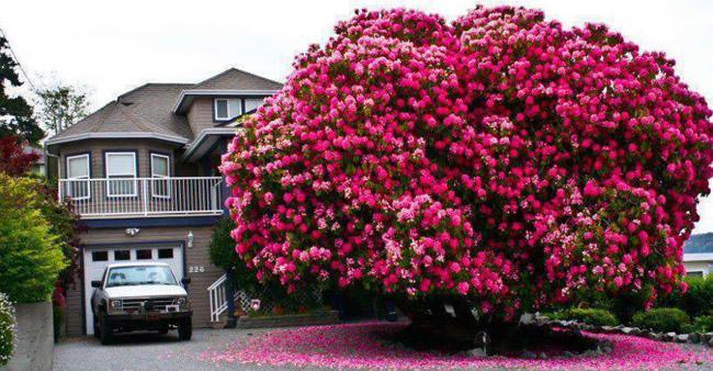 Já ouviu falar dessas árvores? Elas são as mais bonitas do mundo.