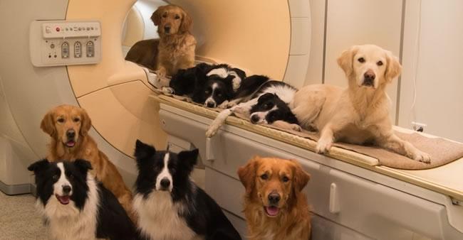 Eles nos amam: estudos revelam como os cães veem seus donos