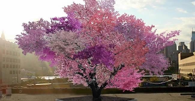 Homem faz com que uma única árvore dê 40 tipos de frutas. E ela é ...