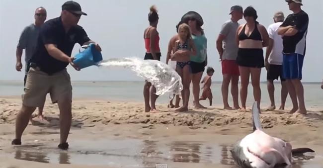 A caçada terminou mal para este tubarão. E o que os banhistas ...
