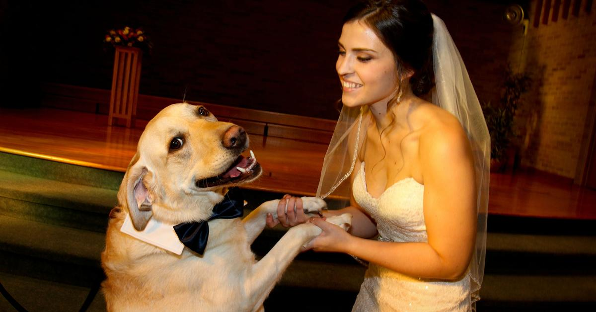 100 fotos de cachorros felizes para derreter o seu coração