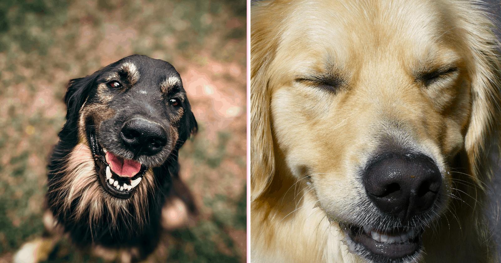 100 Cachorros Felizes para derreter seu coração e transformar o seu dia!
