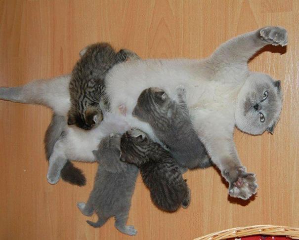20 fotos de gatas com seus filhotes para alegrar o seu dia