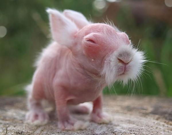 15 animais que ficam quase irreconhecíveis sem pelos