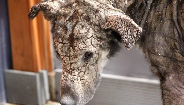 Você vai se emocionar com a incrível história de Petra, a cachorra ...