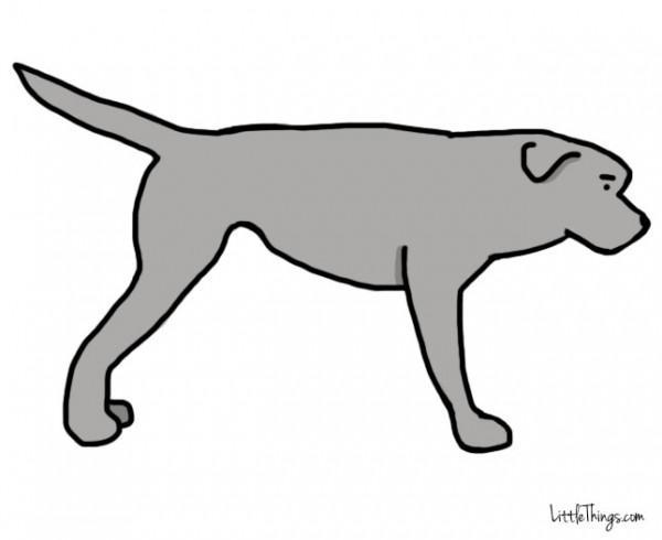 awebic-linguagem-dos-cães-3