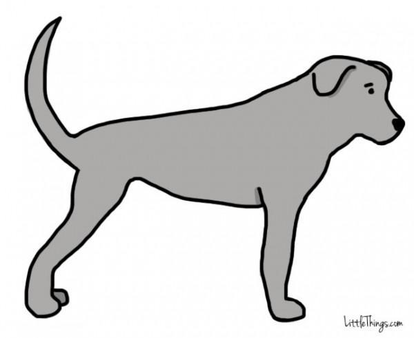 awebic-linguagem-dos-cães-4