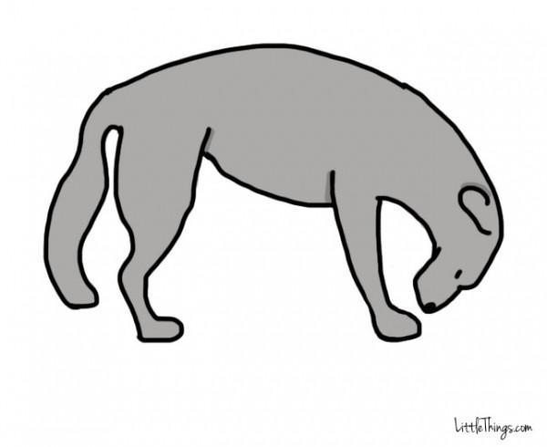 awebic-linguagem-dos-cães-8