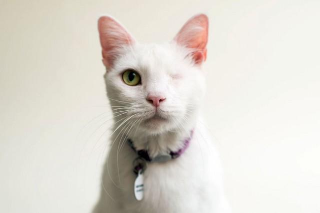 Daisy pertencia a uma acumuladora que tinha 200 gatos e 100 cachorros!