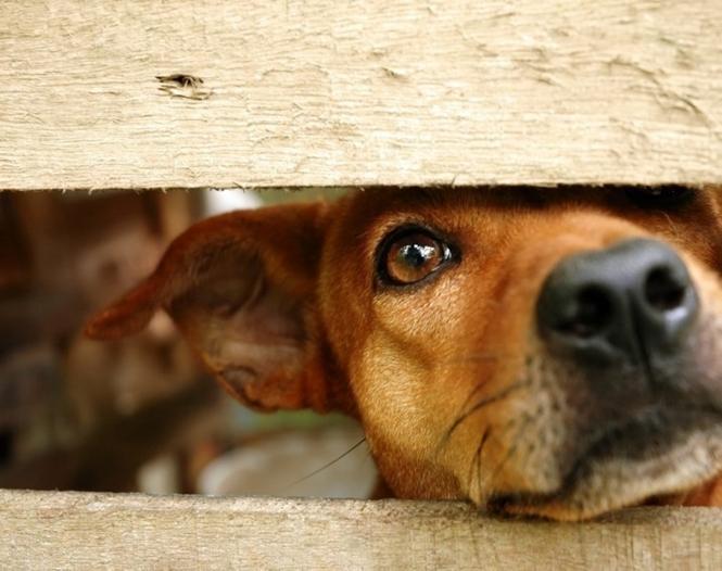 INCRÍVEL! Holanda é o primeiro país do mundo sem animais abandonados