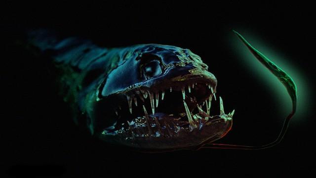 Criaturas Marinhas Peixe-dragão