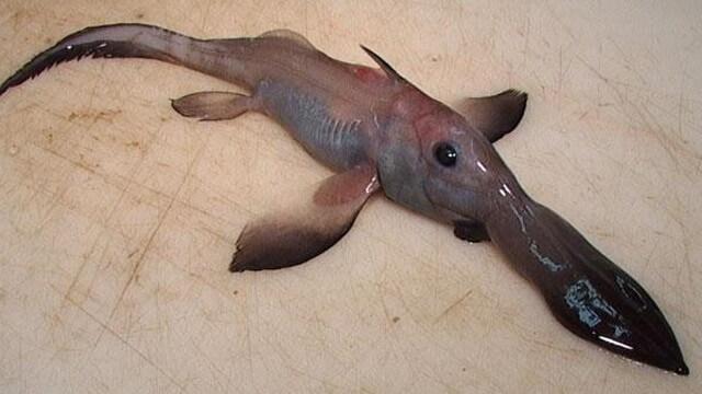 Criaturas Marinhas Quimera