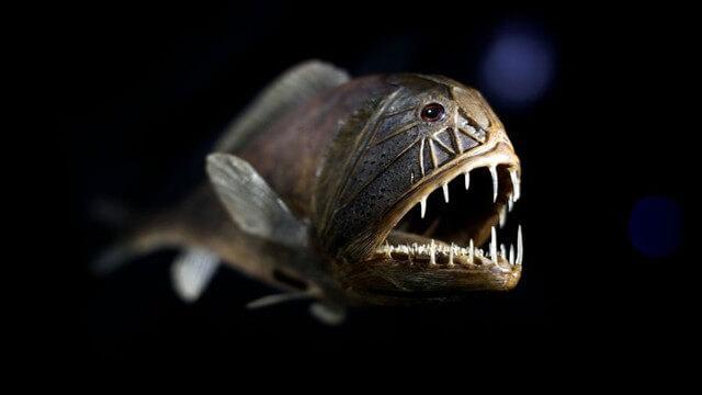 Criaturas Marinhas Peixe-ogro