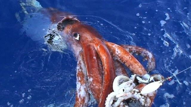 Criaturas Marinhas Lula-gigante