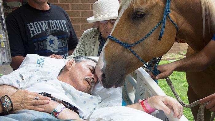 Cavalo com a cabeça encostada no rosto do veterinário