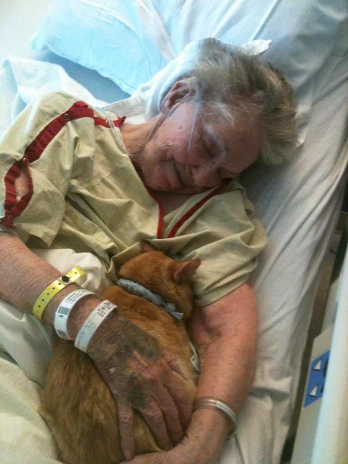 Mulher abraçando seu gato na maca do hospital