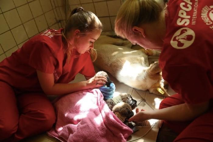 Voluntários examinando os cachorros