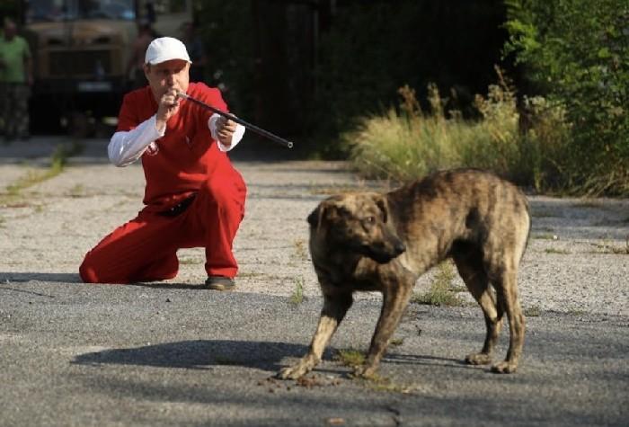 Homem atirando um dardo tranquilizante em um cachorro