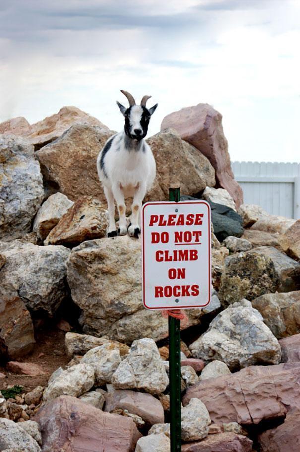 Animais que não seguem as regras 13