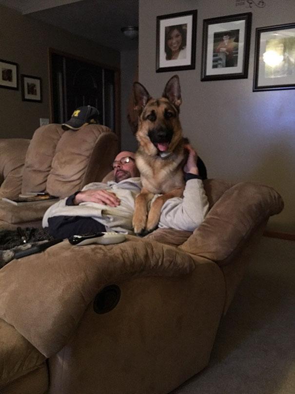 Pais que não queriam cachorros em casa 13