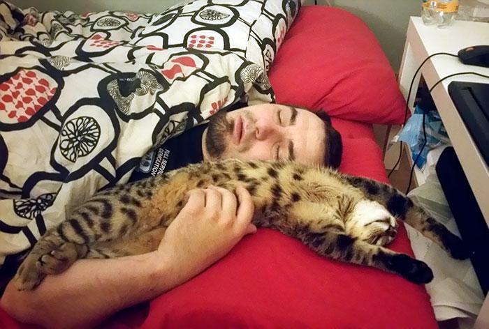 Pessoas que diziam odiar gatos '12