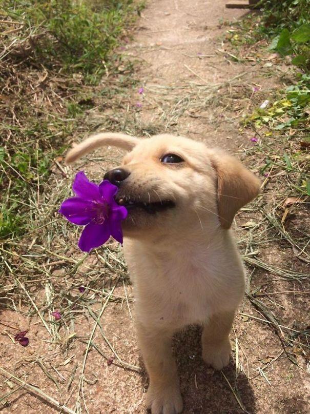 Resultado de imagem para imagens de animais com flores na boca
