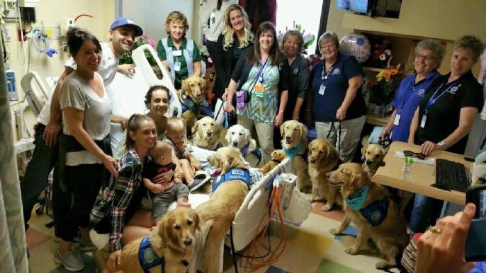 Cães ajudando vítimas do tiroteio em Las Vegas 1