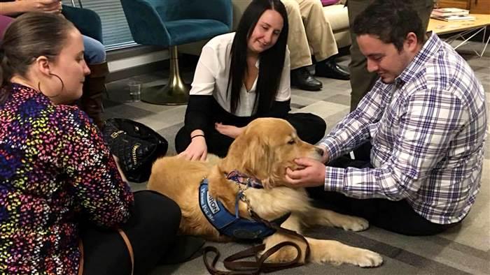 Cães ajudando vítimas do tiroteio em Las Vegas 5