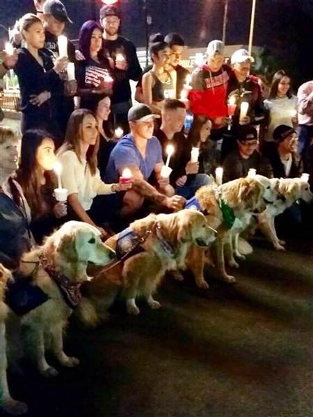 Cães ajudando vítimas do tiroteio em Las Vegas 6