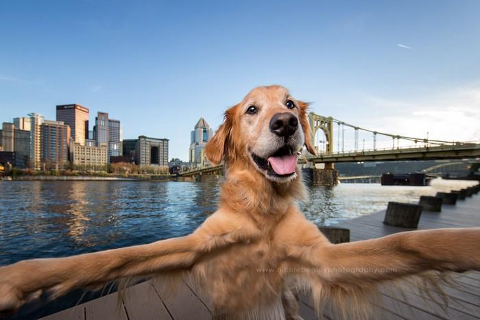 Cachorro tirando selfie 11