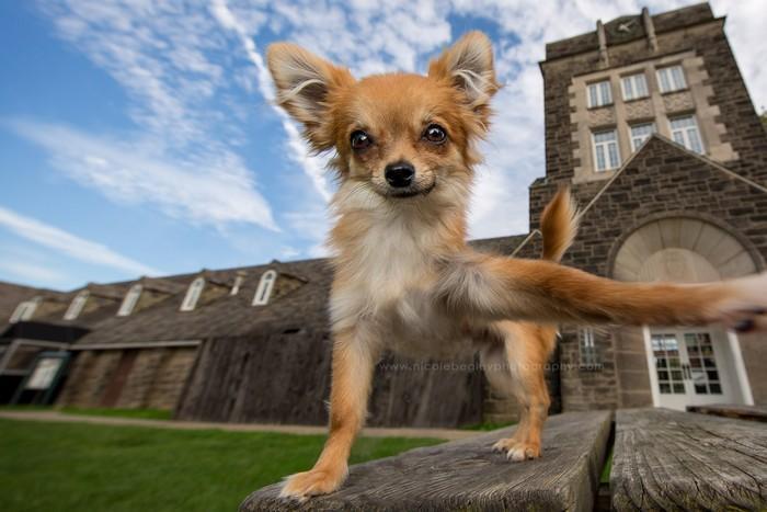 Cachorro tirando selfie 9
