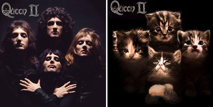 Artista substitui músicos por gatos (23)