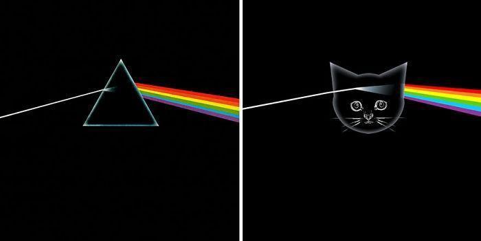 Artista substitui músicos por gatos (22)