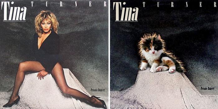 Artista substitui músicos por gatos (18)