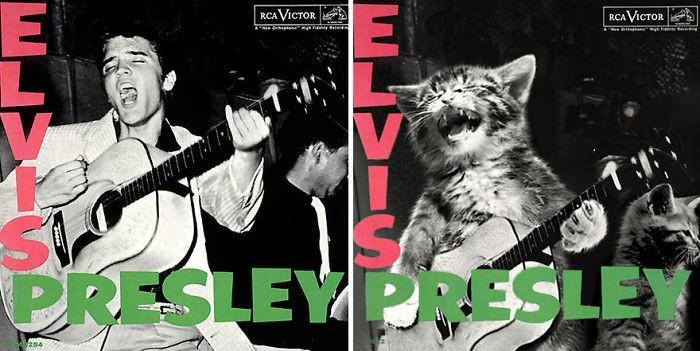 Artista substitui músicos por gatos (17)