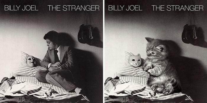 Artista substitui músicos por gatos (32)