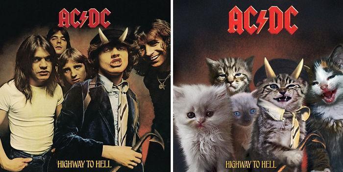 Artista substitui músicos por gatos (13)