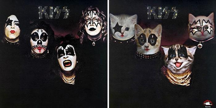Artista substitui músicos por gatos (10)