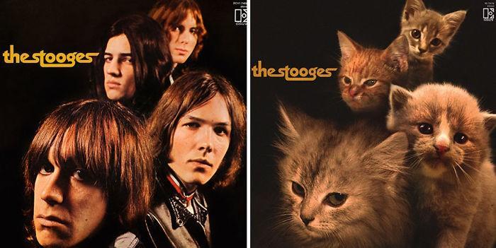 Artista substitui músicos por gatos (9)