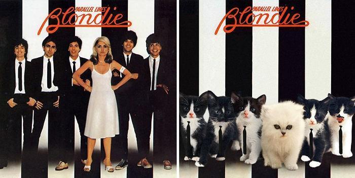 Artista substitui músicos por gatos (8)