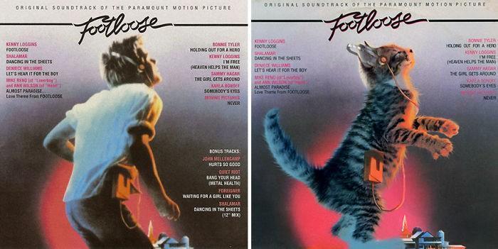 Artista substitui músicos por gatos (7)