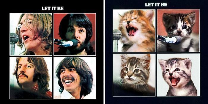 Artista substitui músicos por gatos (6)