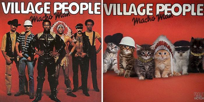 Artista substitui músicos por gatos (5)